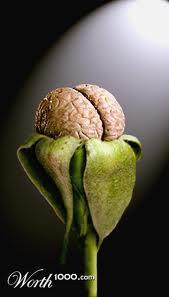 brain bloom