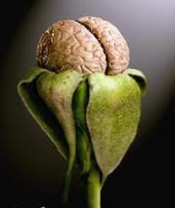 cropped-brain-bloom3.jpg